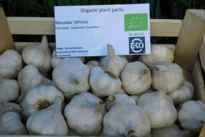 Garlic Messidor - ORG